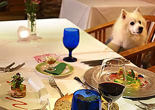 リストランテで愛犬とご一緒にお食事を召し上がれます