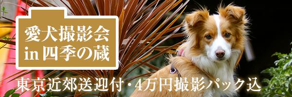 愛犬撮影会 in 四季の蔵
