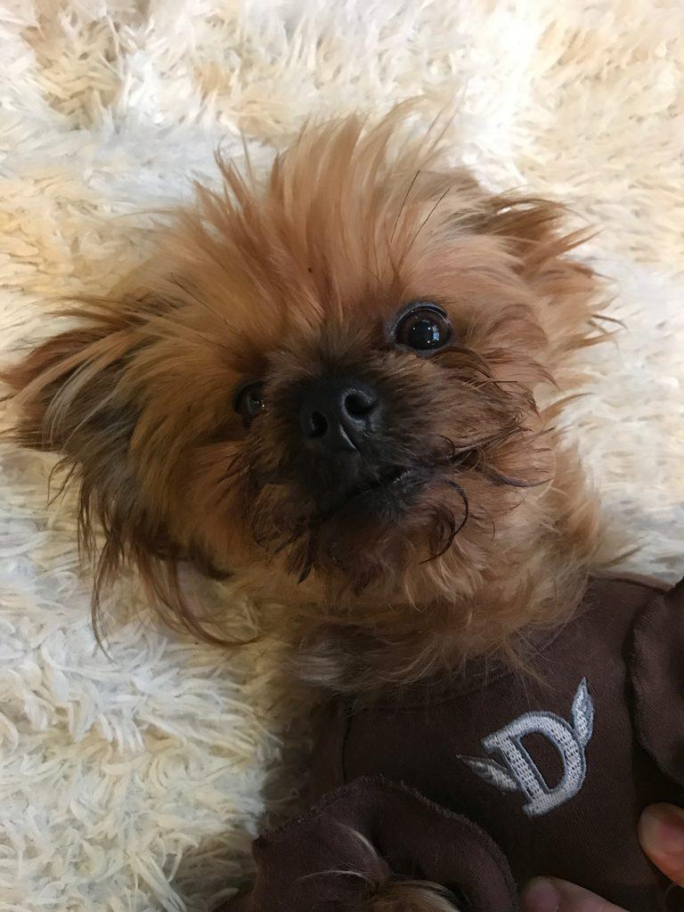 楽天トラベル 看板犬コンテスト開催中!