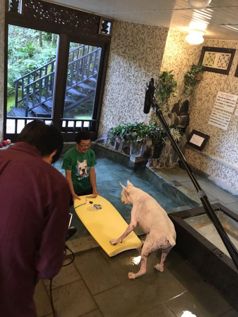 NHK 新番組【もふもふモフモフ】