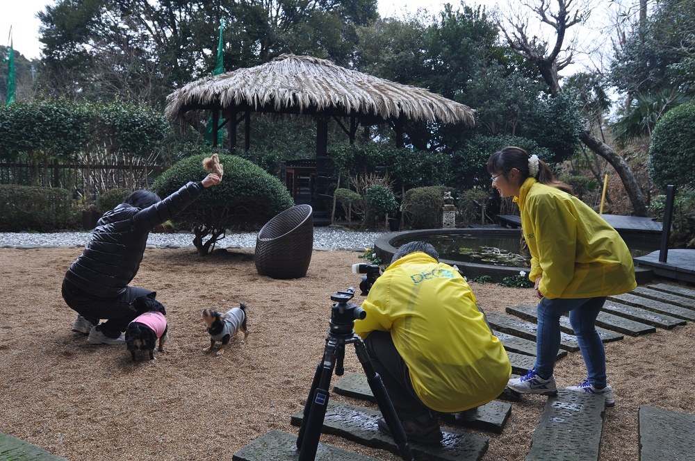 プロカメラマンによる愛犬撮影会